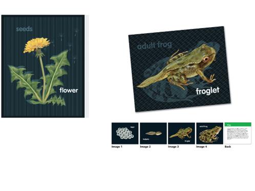 动植物成长卡18片组
